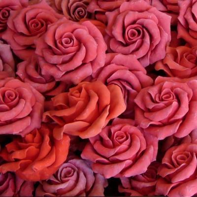 Rose 21191 1280